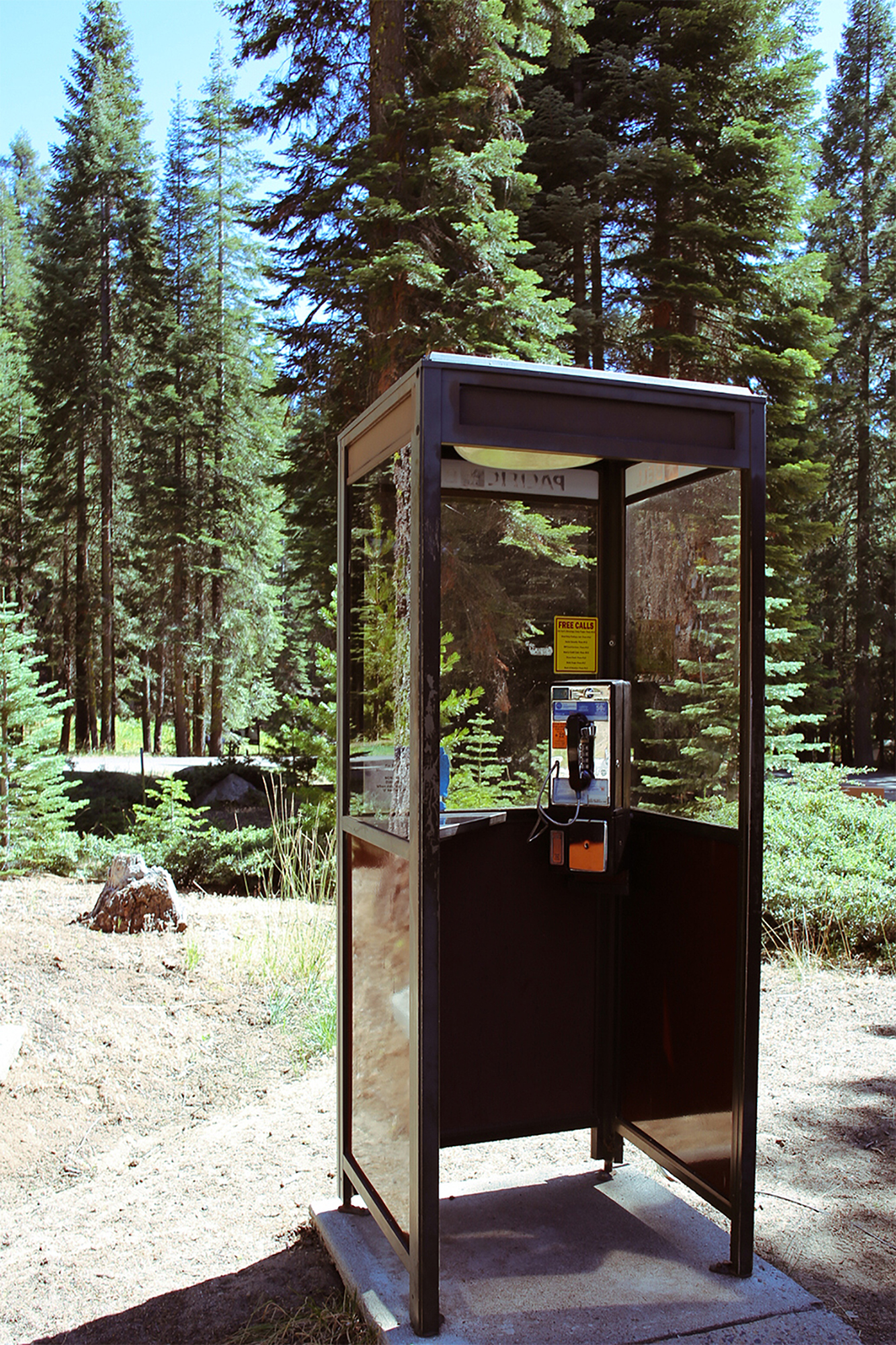 Telephone Stand in the Woods