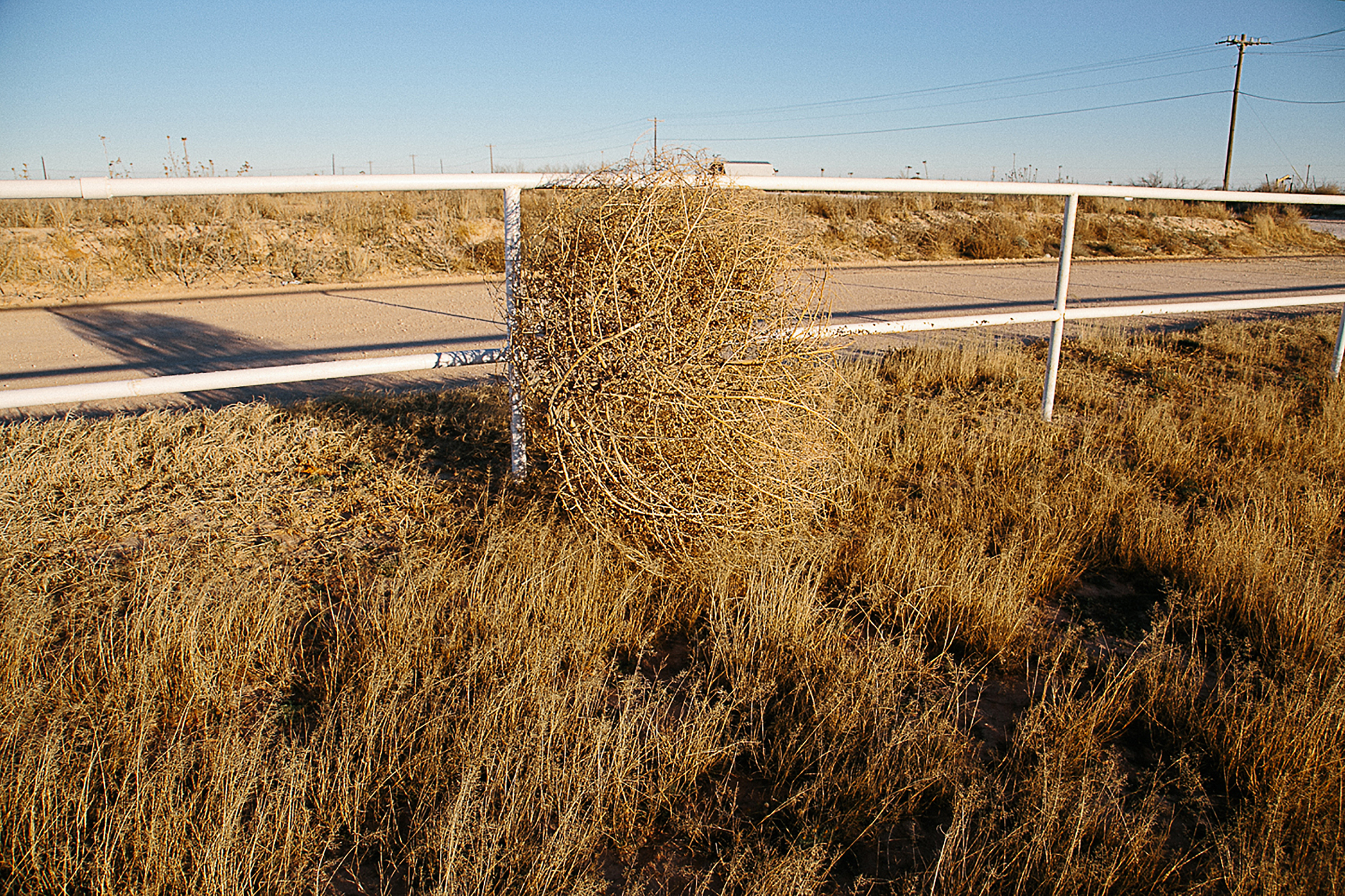 Big tumble weed by a white fence